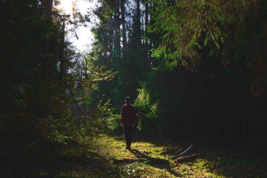 Niets werkt zo inspirerend als een wandeling in de natuur.