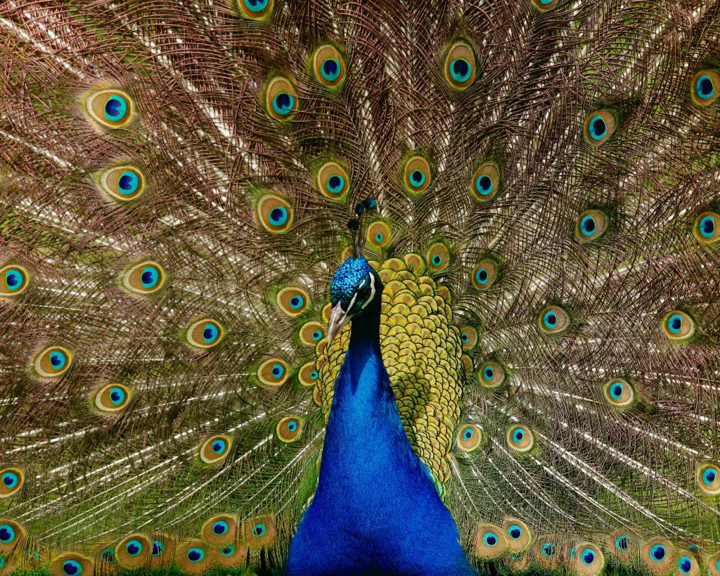 Inspirerende titels zoals The Vow of the Peacock